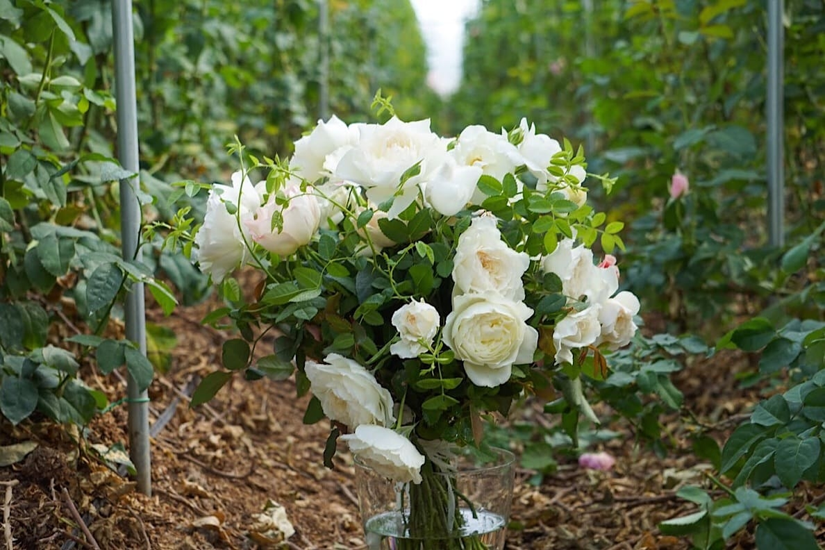 19ss_journal_dorette_11.jpg